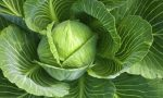 Сколько калорий в капусте Белокочанной свежей