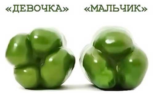 Энергетическая ценность болгарского перца